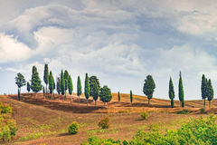 Fields in Tuscany. A red Fields in Tuscany royalty free stock photography