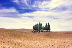 Fields in Tuscany. A red Fields in Tuscany stock image