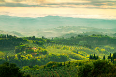 Fields in Tuscany Stock Image