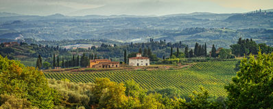 Fields in Tuscany stock images