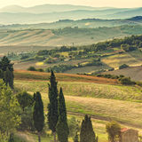Fields in Tuscany. A red Fields in Tuscany royalty free stock image