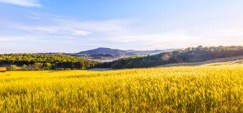 Fields of Tuscany. Yellow fields of Tuscany, a beautiful italian landscape Royalty Free Stock Photo