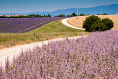 Fields in Valensole Stock Photography