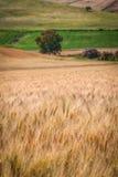 fields vete Royaltyfria Foton