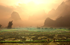 Fields in Vietnam Stock Photography