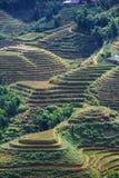 Fields in Vietnam Royalty Free Stock Image