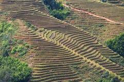 Fields in Vietnam Stock Photography