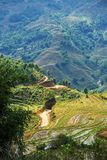 Fields in Vietnam Royalty Free Stock Photo