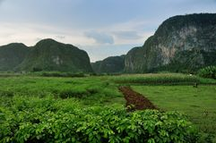 Fields in Vinales valley Stock Photos