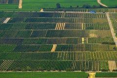 fields vinen Arkivfoton