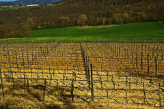 Fields vineyard. Fields cultivate to vineyard in tuscany, italy stock photography