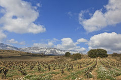 Fields of vineyards Royalty Free Stock Photos