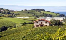 Fields of vineyards i. N Zumaia, San Sebastian, Spain on a sunny day royalty free stock image