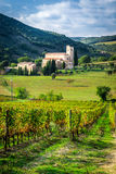 Fields of vineyards nearby monastery in Tuscany Royalty Free Stock Photography