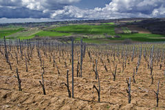 Fields and vineyards Stock Photography
