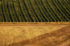 Fields and vineyards in South Moravia in Czech Republic. A photo of vineyard and fields in Southern Moravia in Czech Republic royalty free stock photography
