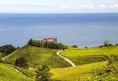 Fields of vineyards. In Zumaia, San Sebastian, Spain on a sunny day stock image