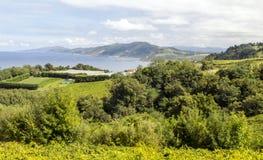 Fields of vineyards. In Zumaia, San Sebastian, Spain on a sunny day stock photo