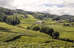 Fields of vineyards. In Zumaia, San Sebastian, Spain on a sunny day royalty free stock image