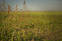 Fields in waiting Royalty Free Stock Photos