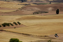 Fields of wheat. At summer Stock Image
