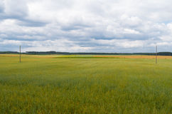 Fields of wheat and heavy clouds Royalty Free Stock Photography