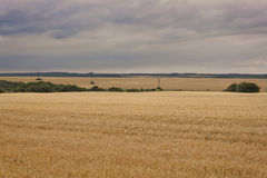 Fields of wheat, rain clouds Royalty Free Stock Photography