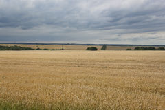 Fields of wheat, rain clouds Stock Images
