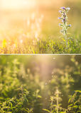 Fields of wildflowers and grass Royalty Free Stock Image