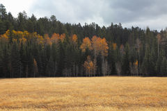 Fields and woods near the North Rim Stock Photos