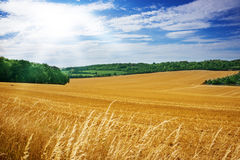 Fields and woods in summer Stock Photos