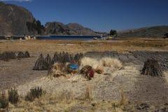Fields on Yampupata peninsula Royalty Free Stock Image