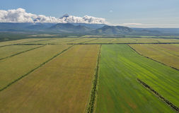 Fields of the Yelizovsky District in Kamchatka Peninsula. Stock Images