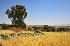 Fields with a yellow dry grass and  tree Stock Photos