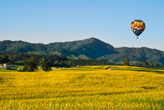Fields of yellow flowers with a balloon Stock Photography