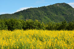 Fields of yellow  view mountain Stock Photography