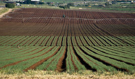 Fields in Yezreel Valley Royalty Free Stock Image