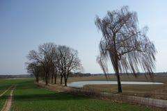 Fieldscape e una strada alberata a sud di Olsztyn, Polonia Immagini Stock