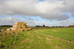 Fieldscape with round bales Royalty Free Stock Photo
