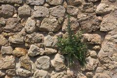 Fieldstone ściana Z Blueweed zdjęcie royalty free