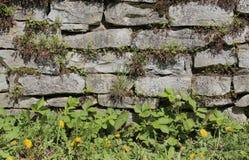 Fieldstone ściana z różnorodnymi różnymi dzikimi roślinami zdjęcia royalty free