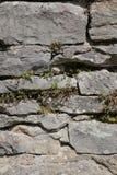 Fieldstone ściana z różnorodnymi różnymi dzikimi roślinami obraz stock