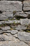 Fieldstone wall with various different wild plants.  Stock Image