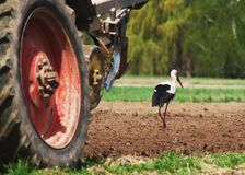 Fieldwork. Birds follow the tractor during field work Royalty Free Stock Images