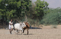 Fieldwork in India Royalty Free Stock Photos