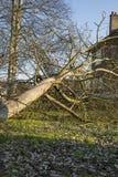 Fieltro del árbol del ciclón de la tormenta Foto de archivo libre de regalías