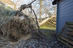 Fieltro del árbol del ciclón de la tormenta Fotos de archivo