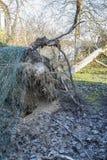 Fieltro del árbol del ciclón de la tormenta Imagen de archivo
