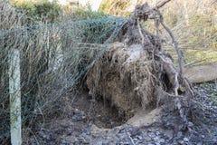 Fieltro del árbol del ciclón de la tormenta Imágenes de archivo libres de regalías