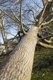 Fieltro del árbol del ciclón de la tormenta Imagen de archivo libre de regalías